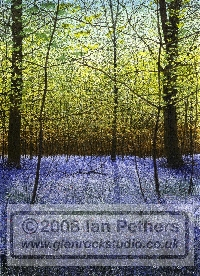 Bluebells, watercolour by Ian Pethers